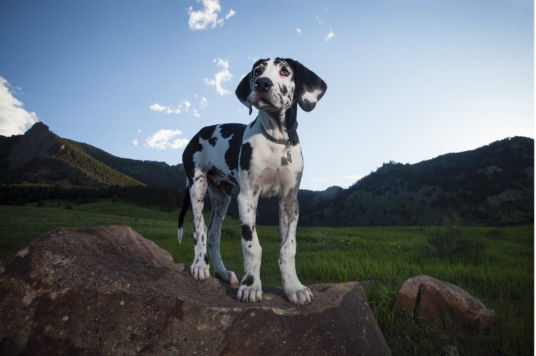 coloradoanimalsphotographer